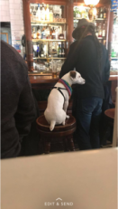 """Local dog and owner having a drink at Aether and Echo on a Sunday afternoon. They called this """"their church."""""""