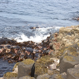 Stones and water and seaweed.