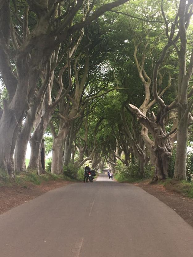 Shamrocker Dark Hedges